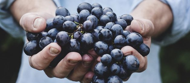 is it safe to eat grapes in pregnancy